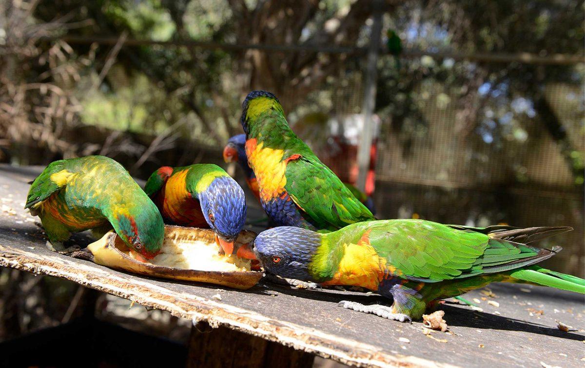 Animal & Wildlife Encounters