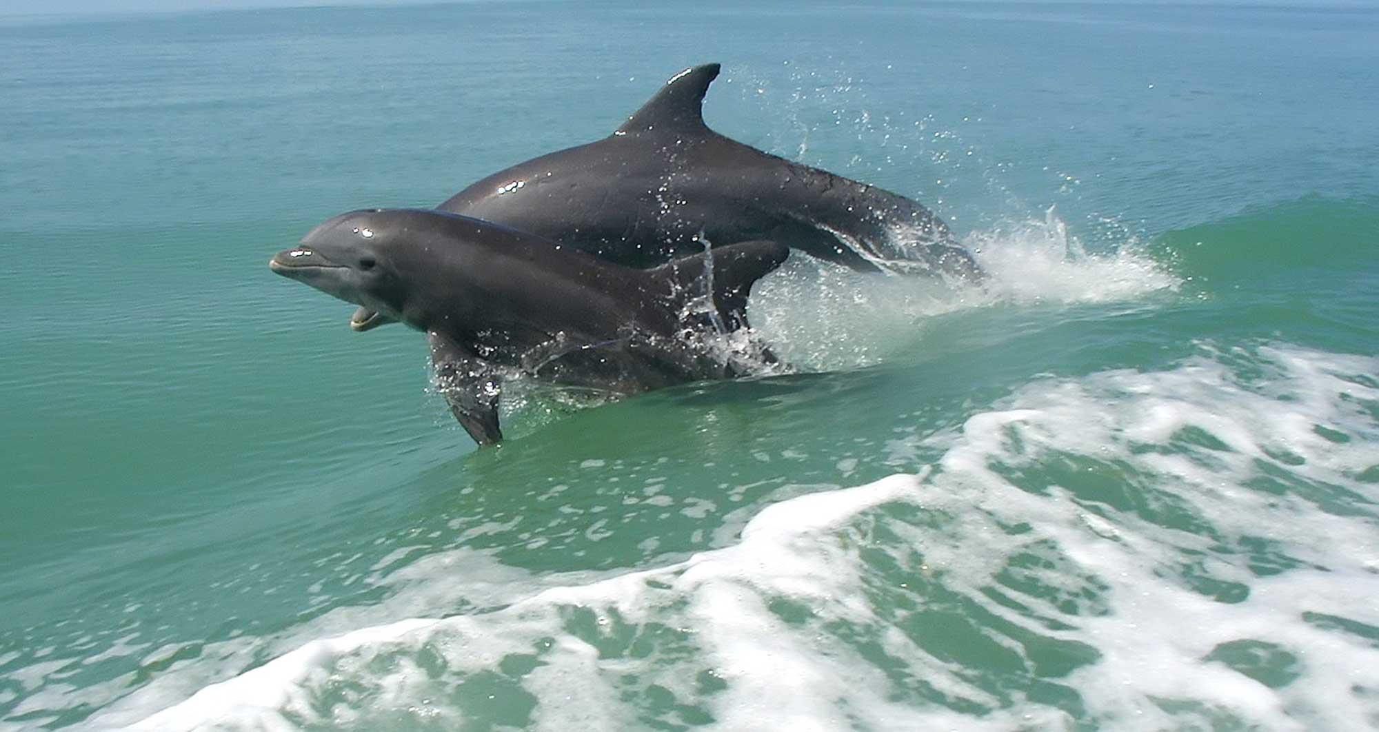 02-Dolphin Cruise Visit Mandurah
