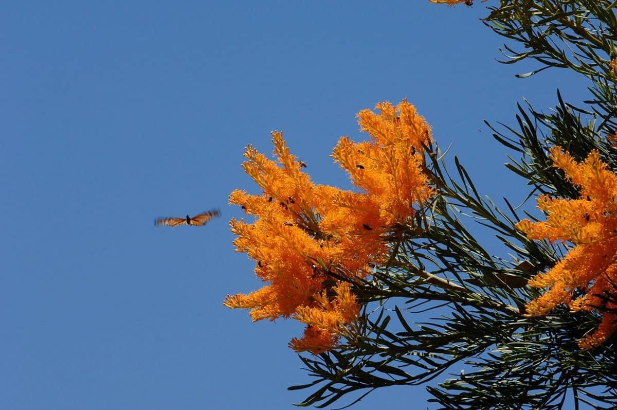 Spring in Mandurah