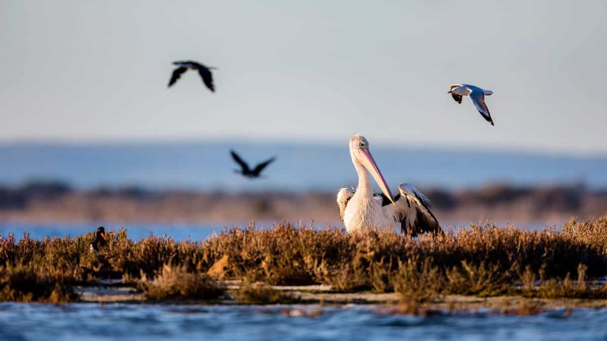 Mandurah Wetlands and Birdwatching