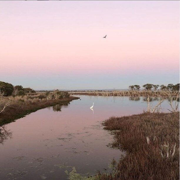 #Mandurah is relaxed by nature - no further proof needed. :-)📷 @jess_channing#visitmandurah #westernaustralia #thisisWA #wanderoutyonder  #adventureawaits #seePerth #helloperth #soperth #perthisok