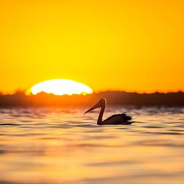 @soulmate_charters gives you a cruise experience that's a little bit different – it's at a slow pace so you can soak in every moment in. And your skipper is a #Mandurah local with a love for the water so he'll find you that special spot to admire a west coast #sunset.  #bestinthewest #visitmandurah #seeperth #wanderoutyonder #thisiswa #westernaustralia