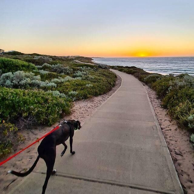 Time with your favourite walking buddy and views to boot along the way!   📷: @damion.norwood   #visitmandurah #mandurah #seeperth #wanderoutyonder #thisiswa #westernaustralia